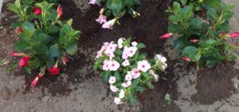 Ponticelli, fiori contro gli spacciatori