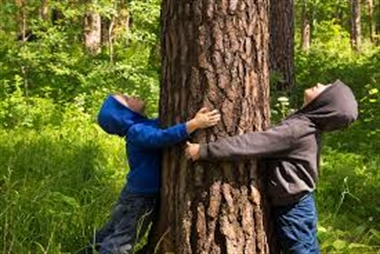 """Festa dell'albero al Bosco di Capodimonte """"Racconta la tua storia al Bosco di Capodimonte. Adotta una panchina, un albero o una fontanella"""","""