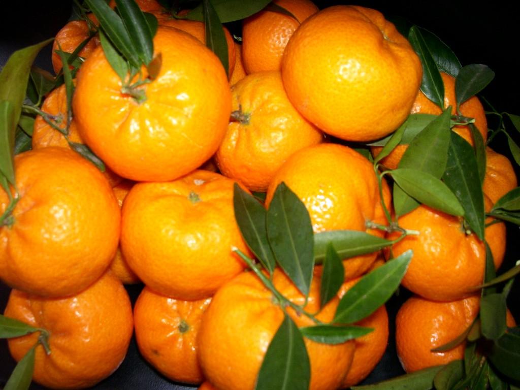 Museo di Capodimonte, al via la festa del mandarino nel weekend L'evento si terrà presso il Cellaio in occasione del duecentesimo anniversario della piantumazione del mandarino originario della Cina all'interno del Real Bosco