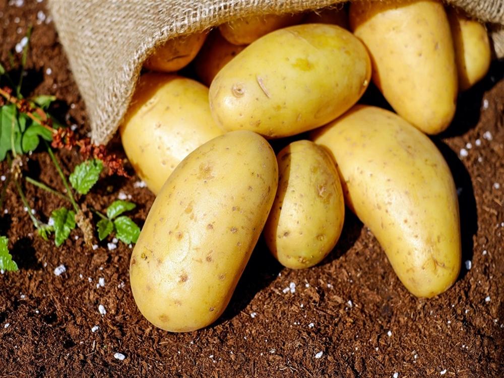 Il rito della patata interrata Nel suggestivo borgo di Cautano (BN),  l'evento Taburno Experience: workshop culinario, degustazioni, laboratorio sensoriale e mercato della terra