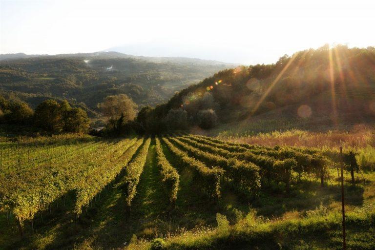 Nel cuore dell'Irpinia: Terre d'Aione organizza 'Calici di stelle'