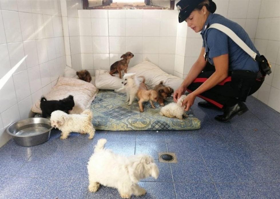 Traffico illegale di cani: dalla Serbia all'Italia. Blitz dei carabinieri forestali