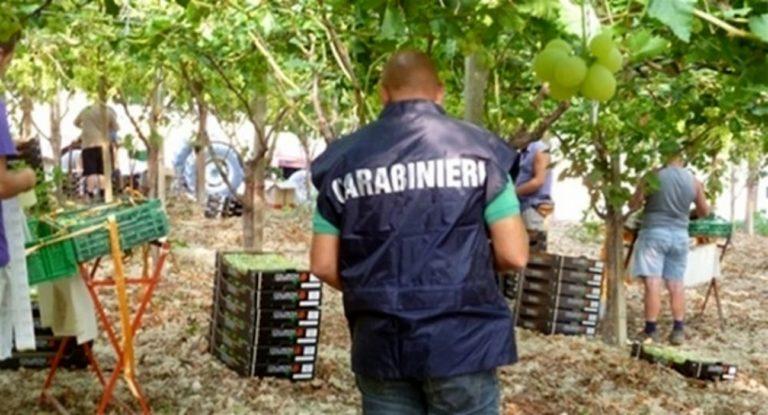 La tragedia annunciata di uno schiavo bianco: Pasquale, padre di tre figli e bracciante a 40 euro al giorno