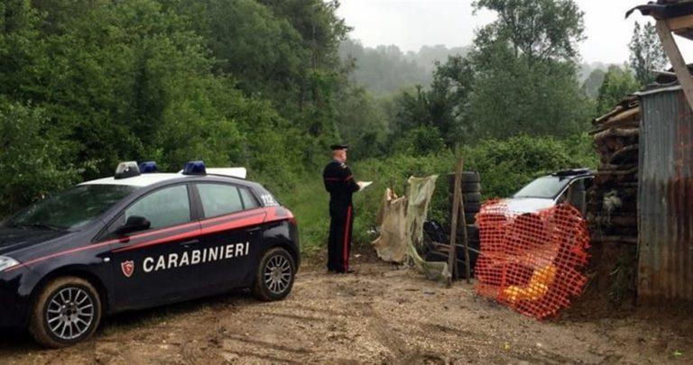 Tragedia in un allevamento: scrofa uccide un uomo e ferisce gravemente un bimbo