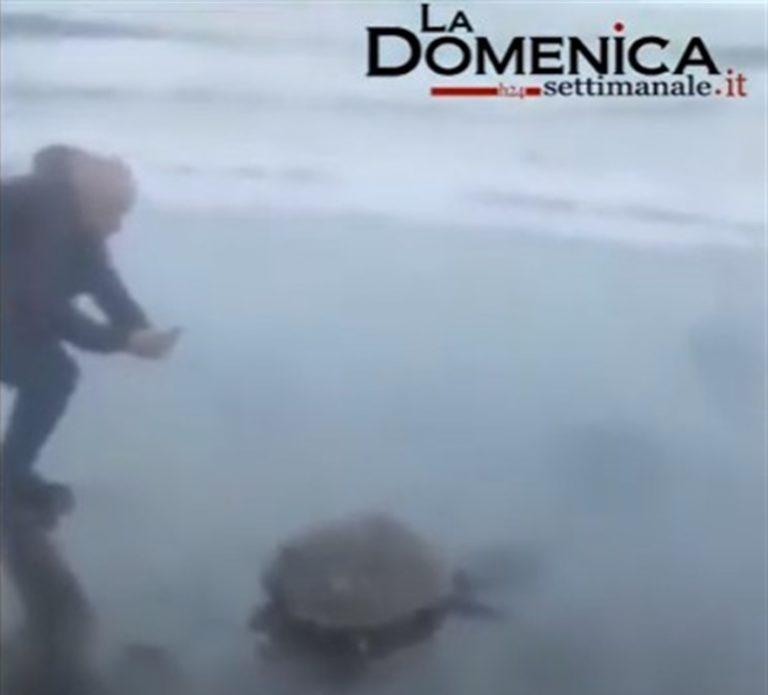 Miracolo di Natale: Salvano tartaruga incastrata nelle plastica e la battezzano 'Ciaccarella'