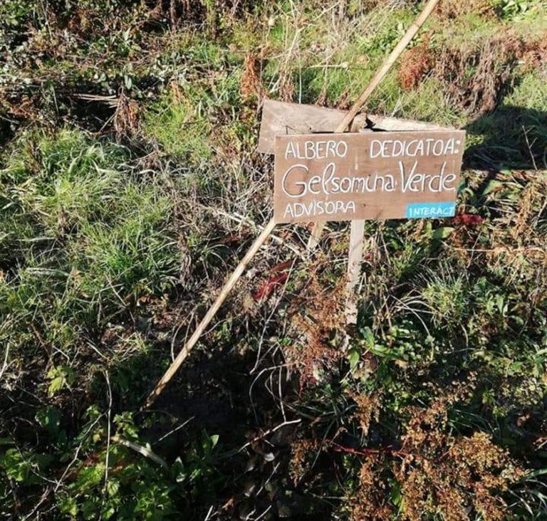 Raid al bene confiscato, Fondo Rustico Amato Lamberti di Chiaiano: rubati anche gli alberi dedicati a Falcone, Borsellino e Gelsomina Verde