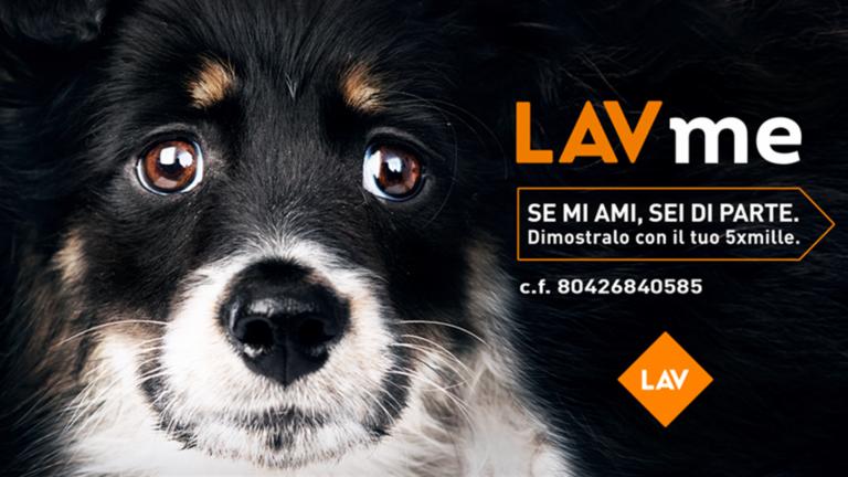 Animali, presentato il rapporto Lav: in Campania aumentano i reati