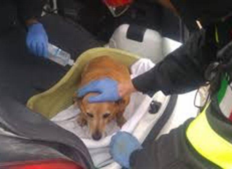 Per ore chiuso in auto, cane salvato da polizia locale