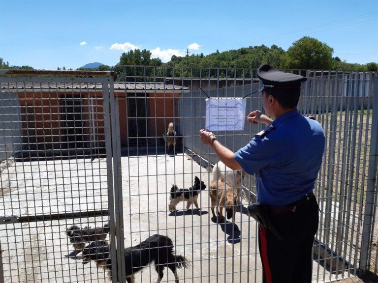 Animali in pessime condizioni scoperti nel Napoletano