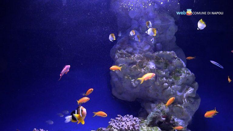 Tra pesci rari e tecnologia, l'acquario della Stazione Zoologica Anton Dohrn di Napoli si rifà look